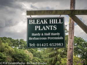 Bleak Hill Plants